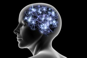Alt=Neurons which make up the 6 higher faculties of the mind
